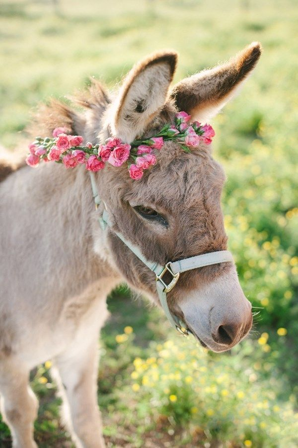 Donkey | animals | Pinterest