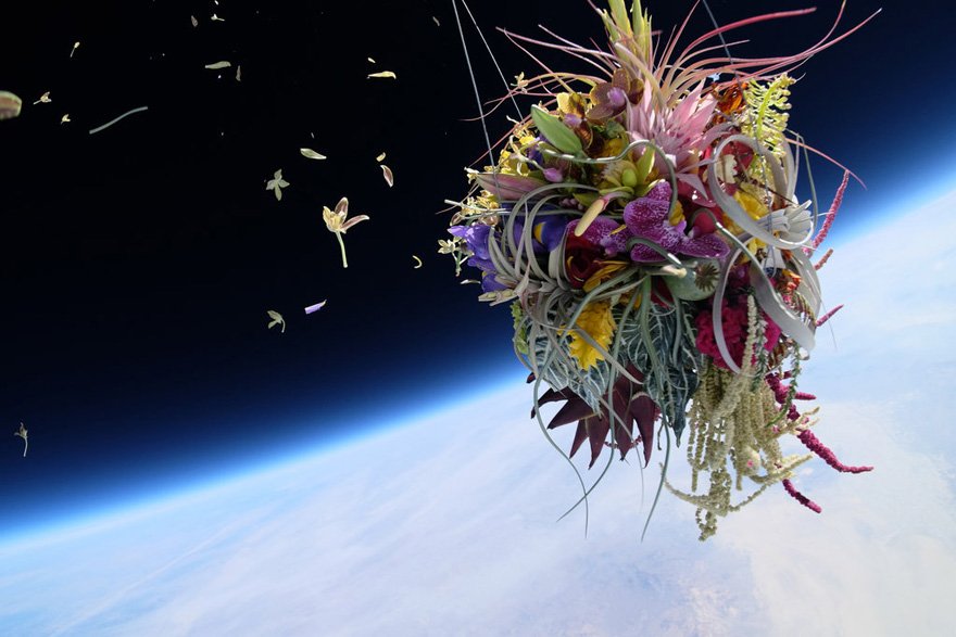 Started From the Stratosphere Now We're Here: Bonsai in Space - Core77