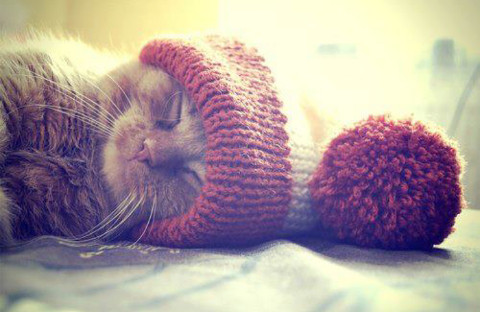 Search results for cute cat kitten sleeping on imgfave