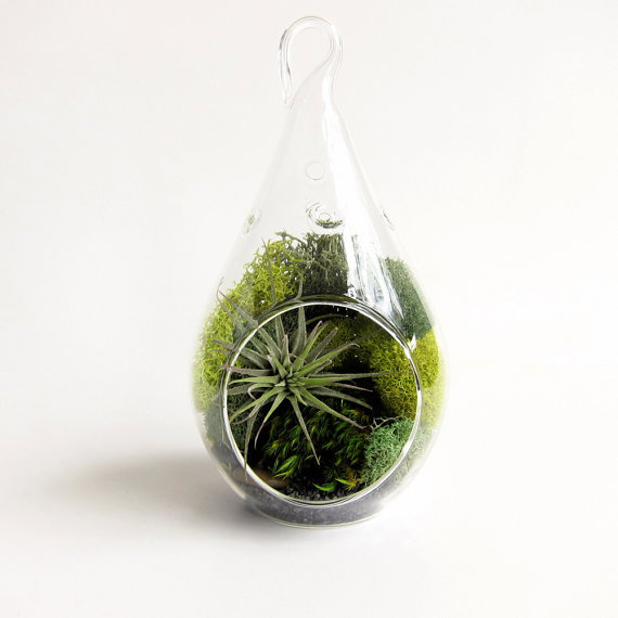 Forest Teardrop Small Terrarium with Air Plant // by groundlings on Wanelo
