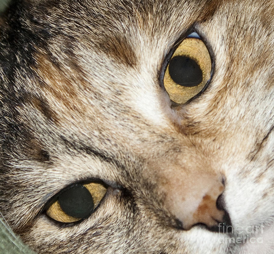 Cat Eyes Close Up Photograph by Michael Waters - Cat Eyes Close Up Fine Art Prints and Posters for Sale