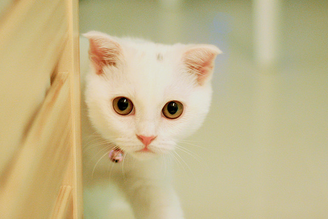 her name is Jumi / 啾咪 :D | Flickr - Photo Sharing!