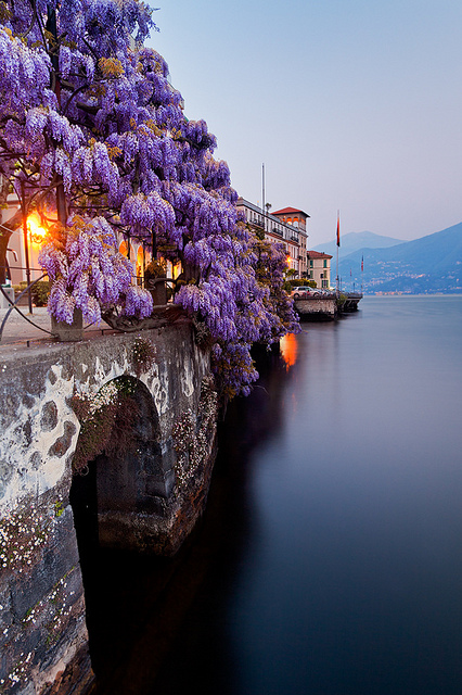 Italy - Lake Como: Wisteria Blues | Flickr - Photo Sharing!