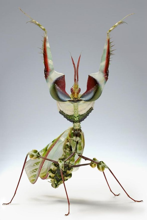 landscape,nature,and architecture / King of Mantis.(10 Pictures)   See More Pictures   #SeeMorePictures
