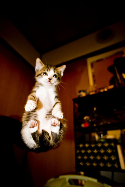 The cat in the air. | Flickr - Photo Sharing!