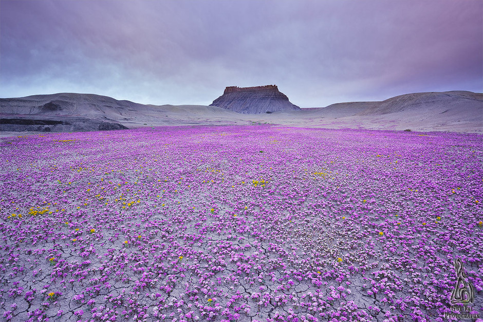 Badlands in Bloom by Guy Tal | Earth Shots