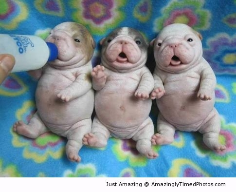 Adorable Baby puppies | Amazingly Timed Photos