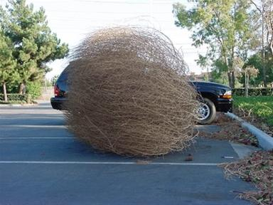 Tumbling Tumbleweeds : Life and Other Matters