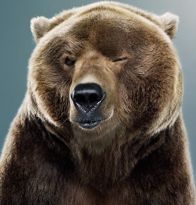 johnny's tumblr (back to black ) — preciouspossession: a winking bear. how can you...