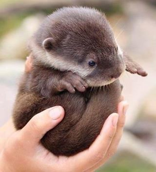nutria | via Facebook | We Heart It