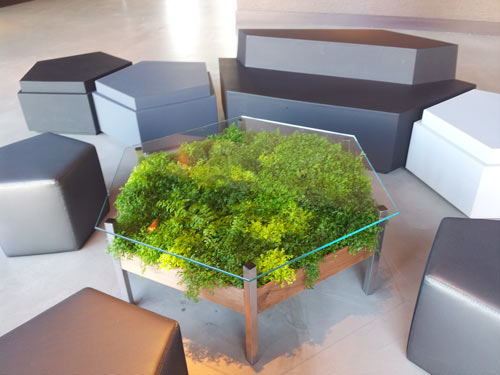 "Introducing Our First Piece of ""Ferniture"": The Living Table » Habitat Horticulture - Habitat Horticulture"
