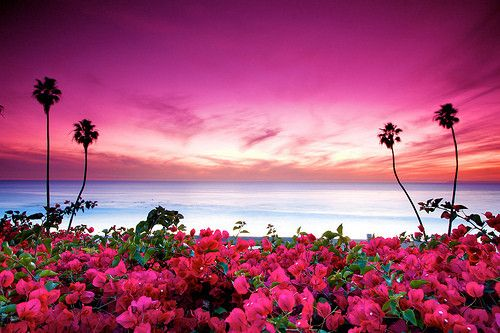 midnighflower: sunset coloored flowers | Pink