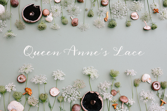 Queen Anne's lace inspiration by Annabella Charles | magnolia rouge