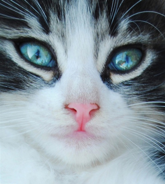 ~♥• Pets Palace •♥~ / Look into my eyes