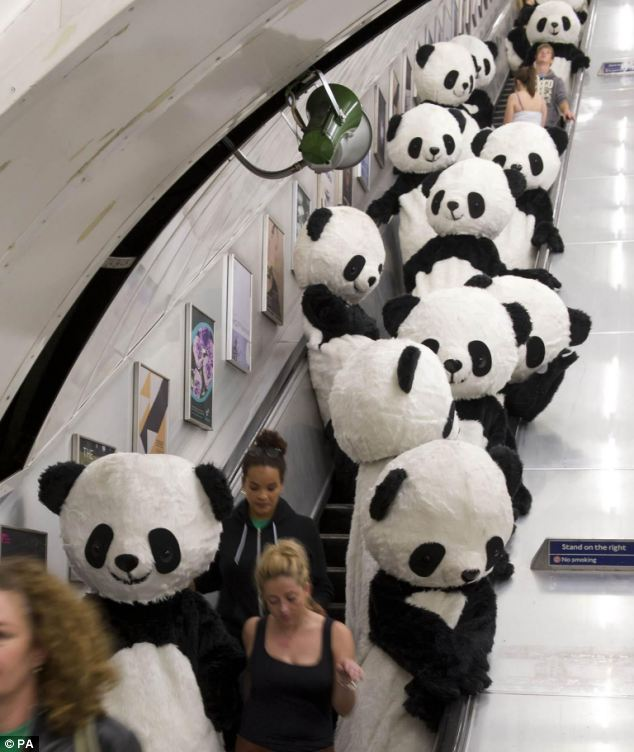 108 'panda bears' catch the tube and do tai-chi for Panda Awareness Week in London streets | Mail Online