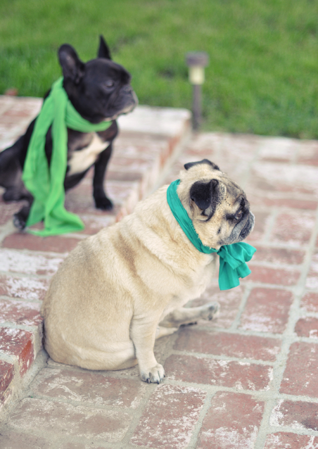 Happy St. Patrick's Day from My Boys | ...love Maegan
