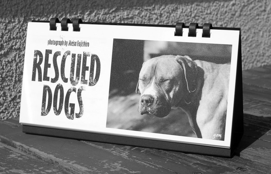 2013年カレンダー「RESCUED DOGS」 - Saturday Store