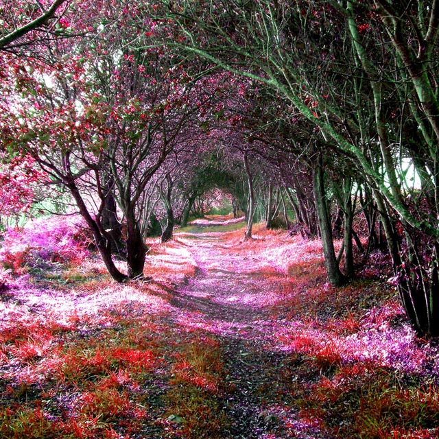 Fancy - Tree Tunnel @ Sena, Spain