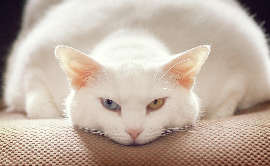 Cat Expression Photograph by Kathryn Froilan - Cat Expression Fine Art Prints and Posters for Sale