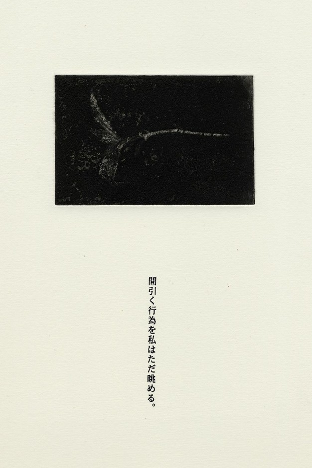 SEED Project:A4 Prints : 画像
