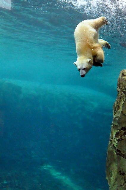 Freedom - Diving - the good life! | ANIMALS & PEOPLE
