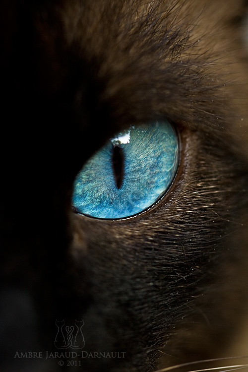cat eye | Think ßlue...