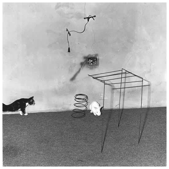Shadow Chamber | Image Gallery | Roger Ballen Photography