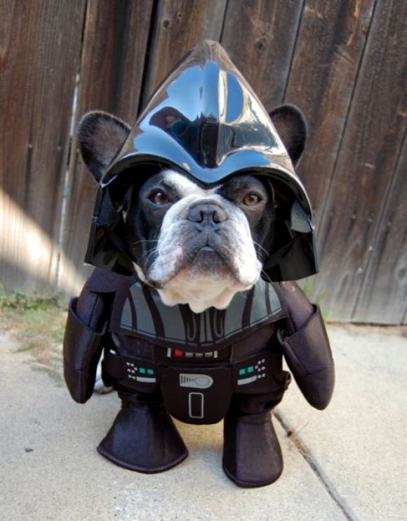 Luke, I Am Your…Dog… | Cutest Paw