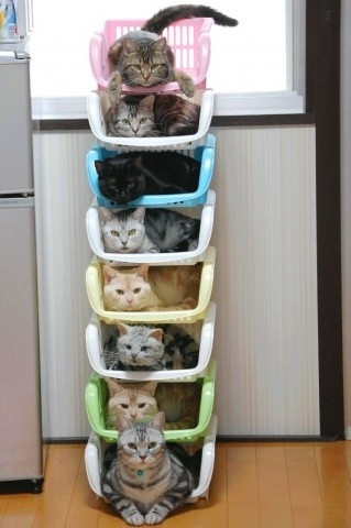 DIY interior / How to store & organize cats