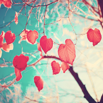 Our hearts are autumn leaves waiting to fall (Pink - Red fall leafs and brilliant retro blue sky) Art Print by Andreka | Society6