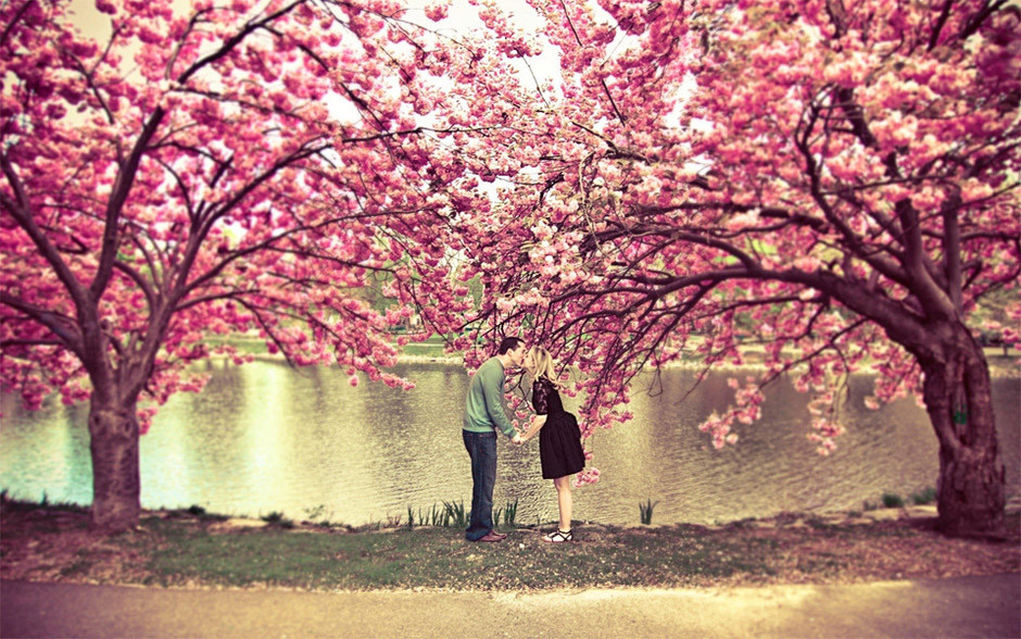 24 of the Most Beautiful Trees Photography that you need to see