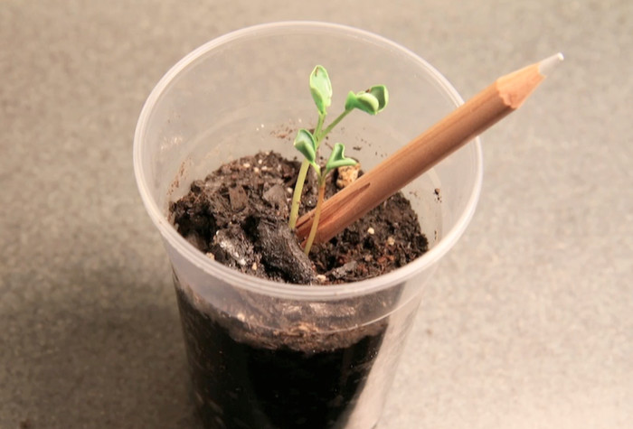 Sprout: a pencil with a seed by democratech — Kickstarter