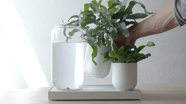 The Pikaplant Tableau Is Self-Watering so Your Plants Don't Die | HYPEBEAST