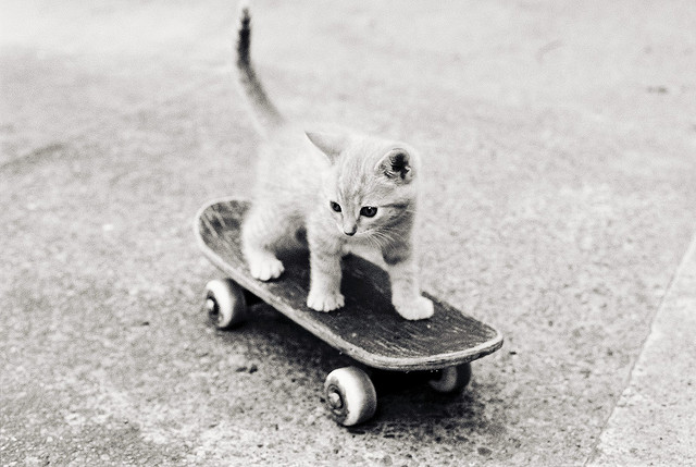 kitten-on-skateboard-640.jpg 640×429 ピクセル