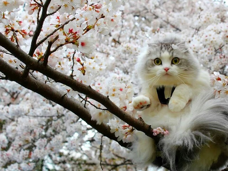 Flowers and Animals - コミュニティ - Google+