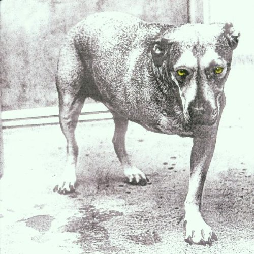 Amazon.co.jp: Alice in Chains: Alice In Chains: 音楽