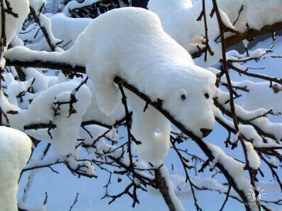 The Real Snow Bear The Great White Bear Very Imaginative Brilliant - Funny Animal Pictures With Captions - Very Funny Cats - Cute Kitty Cat - Wild Animals - Dogs