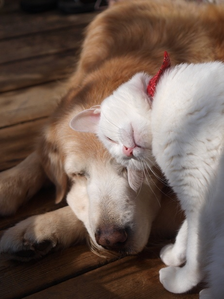 Animals and Pets / Love nudge... cat & dog