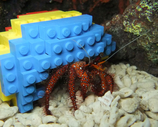 Hermit Crab Decides LEGO Shell Good Enough for Home - Technabob