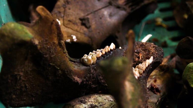 A day at the body farm | Careers | Chemistry World