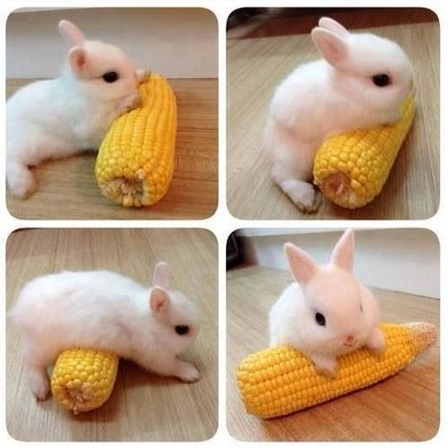 Pin by C.Lo on cute overload | Pinterest