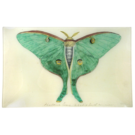 Eyed Green Butterfly (Rectangular Tray)
