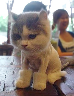 Funologie.com : A Picture Is Worth A Thousand Words!: Cat Wearing UGG