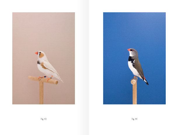 An Incomplete Dictionary of Show Birds