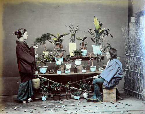 Plants for sale in Japan in 1886 « Tokyo Green Space