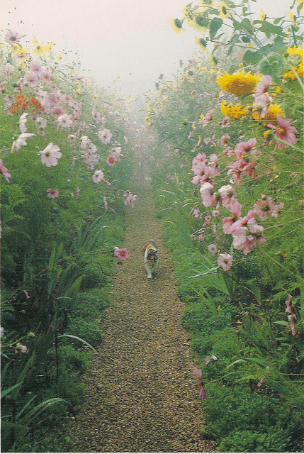 Monet's Gardens at Giverny | Flickr - Photo Sharing!