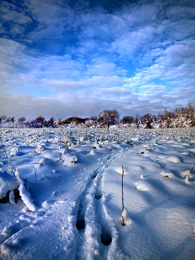 In Search Of Photograph by Phil Koch - In Search Of Fine Art Prints and Posters for Sale