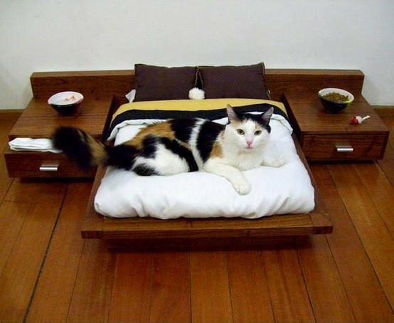 Designer Wooden Cat Bed From Cedel Pets & Style