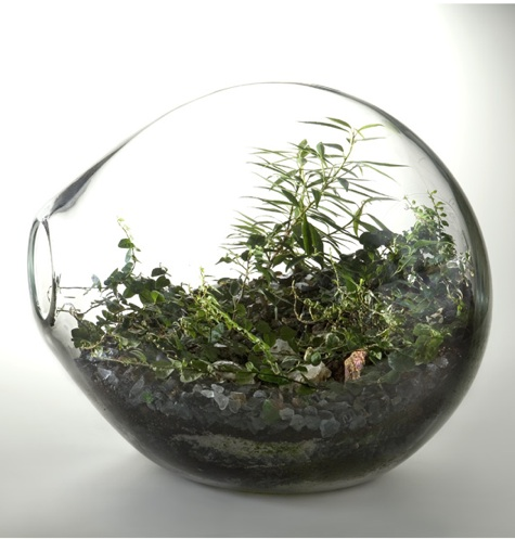 Roost Recycled Glass Bubble Terrarium : Remodelista