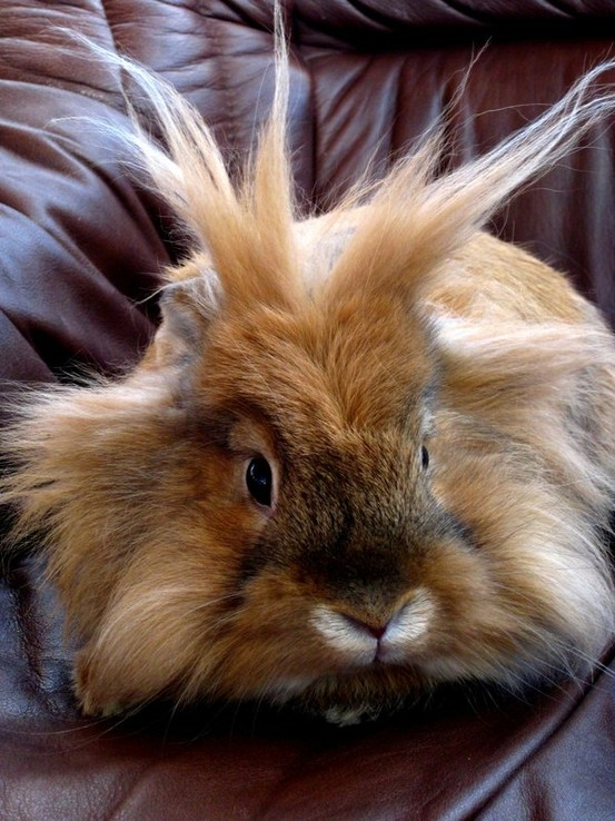 i'm glad we aren't the only ones that can have bad hair (hare) days